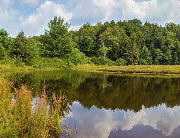 Byrne Hollow Farm Bog Trail image - What's New