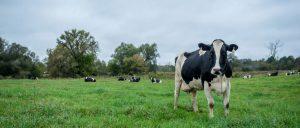 ice cream cows header 1 300x128 - ice-cream-cows-header